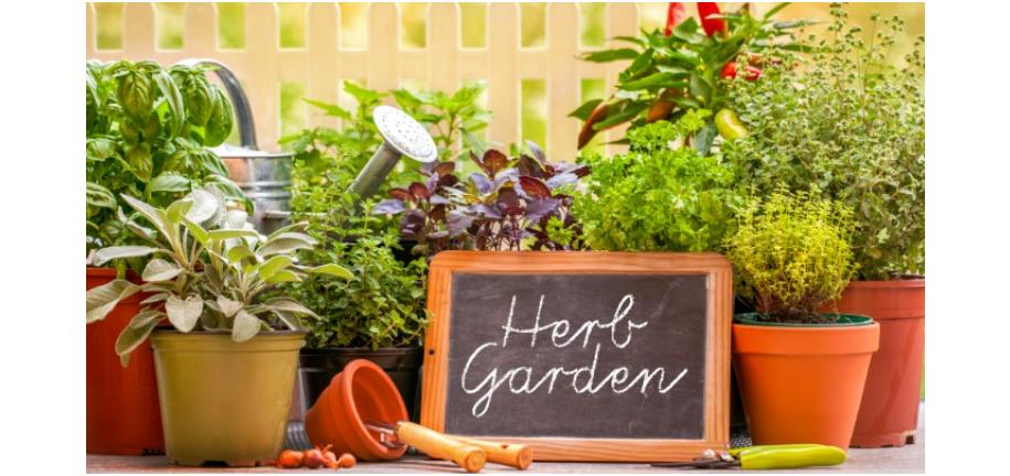 Tips on How to Grow Your Own Herb Garden
